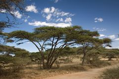Landschap 019 van Afrika ngorongoro royalty-vrije stock foto