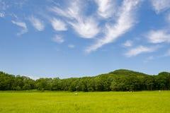 Landschap. Stock Afbeelding