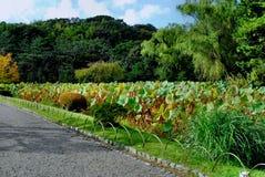 Landschap 3 stock fotografie