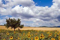 Landschap. Royalty-vrije Stock Afbeelding