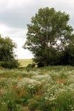 Landschap Royalty-vrije Stock Fotografie