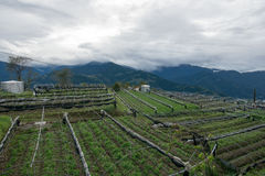 Landschap in alishan mountian Stock Afbeeldingen