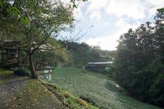 Landschap in alishan mountian Stock Foto's