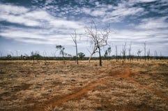 landschap in Australië Stock Afbeeldingen