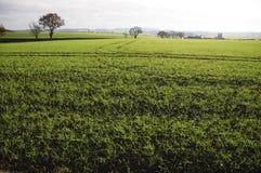 Landschap Bedfordshire Engeland het UK Stock Foto's