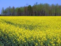 Landschap in België Royalty-vrije Stock Afbeelding