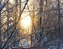 Landschap Bevroren bos Stock Fotografie