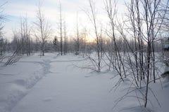 Landschap Bevroren bos Royalty-vrije Stock Foto's