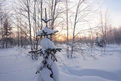 Landschap Bevroren bos Stock Foto's