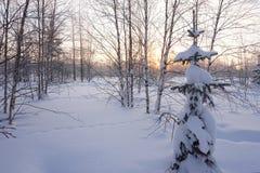 Landschap Bevroren bos Royalty-vrije Stock Foto