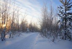 Landschap Bevroren bos Royalty-vrije Stock Afbeeldingen