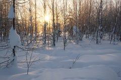 Landschap Bevroren bos Stock Foto