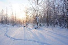 Landschap Bevroren bos Stock Afbeelding