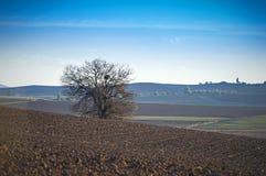 Landschap bij de vlakte van Thebes, Griekenland Royalty-vrije Stock Afbeeldingen