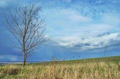 Landschap bij het gebied van de randlandbouw in de lente Royalty-vrije Stock Foto's