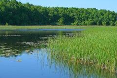 Landschap bij het meer royalty-vrije stock foto