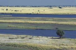 Landschap bij het Nationale Park van Chobe, Botswana stock afbeeldingen