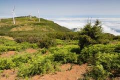 Landschap bij hooglanden Paul da Serra, het eiland van Madera Stock Foto