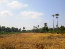 Landschap bij nonthaburi van Thailand royalty-vrije stock foto