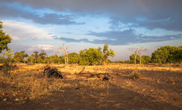 Landschap, Botswana Royalty-vrije Stock Afbeeldingen