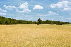 Landschap in Brandenburg (Duitsland) Stock Foto