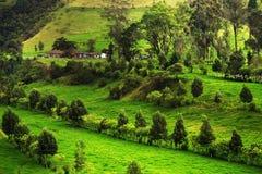 Landschap in Buenavista, Quindio bij zonsondergang royalty-vrije stock afbeelding