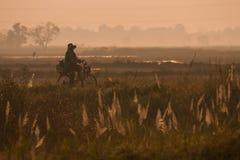 Landschap Chaiyaphum in Thailand Stock Foto's