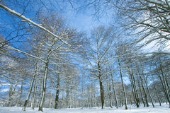 Landschap dat met sneeuw in Opakua wordt behandeld Stock Foto's