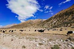 Landschap in de Berg van de de aandrijvingsweg van het xizangtoerisme stock foto's