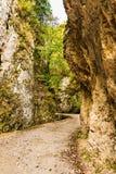Landschap in de bergen van Transsylvanië Stock Foto