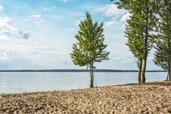 Landschap De bomen groeien op een zandig strand dichtbij het overzees Royalty-vrije Stock Foto's