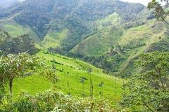 Landschap in de Cocora-Vallei met waspalm, tussen mounta stock foto