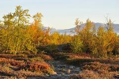 Landschap in de herfst Stock Foto