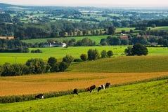 Landschap in de herfst royalty-vrije stock afbeelding