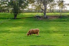 Landschap in de herfst in Belgische Ardennen Stock Foto