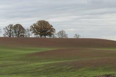 Landschap in de herfst met groene tarwespruiten op landbouwgebied Royalty-vrije Stock Afbeeldingen