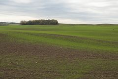 Landschap in de herfst met groene tarwespruiten op landbouwgebied Royalty-vrije Stock Fotografie