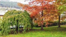 Landschap De herfstbomen in rode en gele tonen De gouden Herfst Royalty-vrije Stock Foto