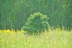 Landschap in de lente stock afbeeldingen