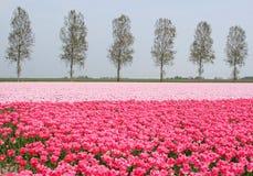 Landschap in de polder royalty-vrije stock foto