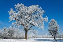 Landschap in de winter Stock Afbeelding