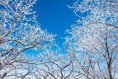 Landschap in de winter, Deogyusan Stock Foto's