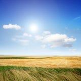 Landschap in de zomer Stock Foto