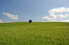 Landschap in de zomer Stock Afbeeldingen