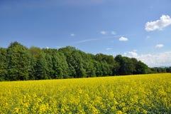 Landschap in de zomer Royalty-vrije Stock Fotografie