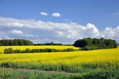 Landschap in de zomer Stock Fotografie