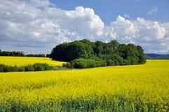 Landschap in de zomer Royalty-vrije Stock Afbeeldingen