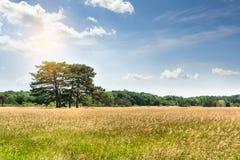 Landschap, Dendrological-Park van de Nationale Reserve askania-Nova, de Oekraïne Royalty-vrije Stock Fotografie