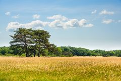 Landschap, Dendrological-Park van de Nationale Reserve askania-Nova, de Oekraïne Stock Foto