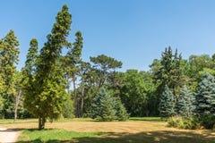 Landschap, Dendrological-Park van de Nationale Reserve askania-Nova, de Oekraïne Royalty-vrije Stock Afbeeldingen